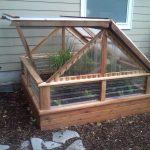 Garden Cedar